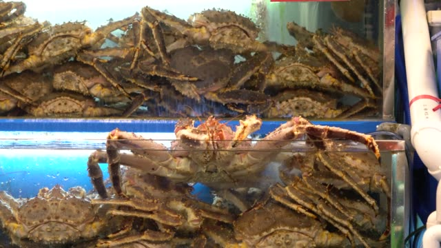alaskan king crab in the tank - crab stock videos & royalty-free footage