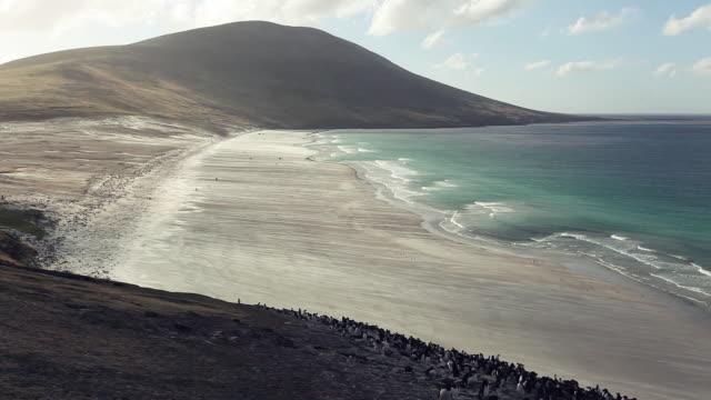 vídeos de stock e filmes b-roll de albatross - ilhas malvinas