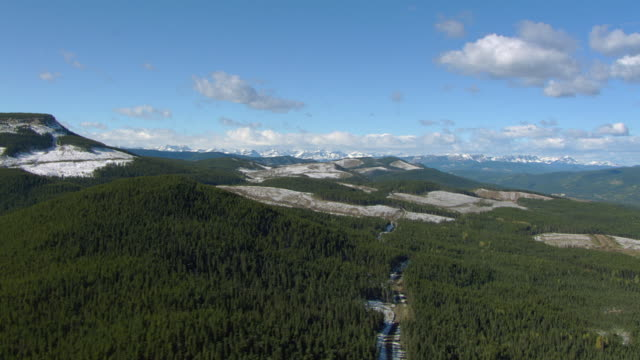 alberta mountain landscape with clearcuts - alberta stock videos & royalty-free footage
