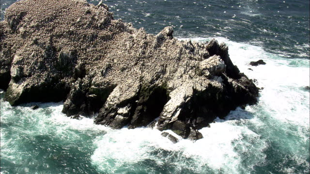 alderney,  seabirds on rock - aerial view - helicopter filming,  aerial video,  cineflex,  establishing shot,  guernsey - channel islands england stock videos & royalty-free footage