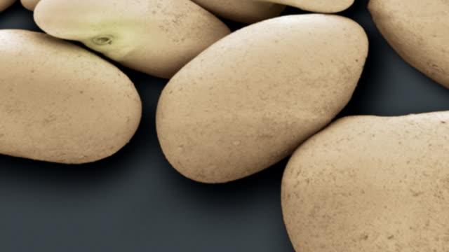 vídeos de stock, filmes e b-roll de alfalfa seeds - micrografia