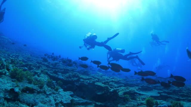 Alfonsino Fisch (Beryx Splendens), Korallen Riff, Japan