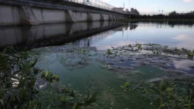 algae blooms that come mostly from the controlled discharges of water from lake okeechobee are seen along the wp franklin lock and dam that helps... - florida us state stock videos and b-roll footage