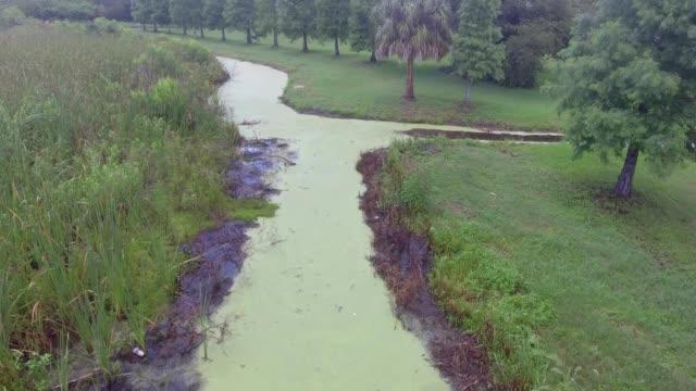 algae filled creek in oldsmar, florida - algae stock videos & royalty-free footage