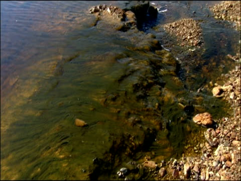 algae in mineral rich river, rio tinto, huelva, andalusia, spain - alge stock-videos und b-roll-filmmaterial