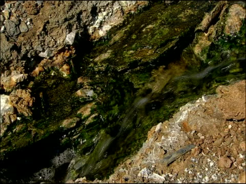 algae in mineral-rich water, rio tinto, huelva, andalusia, spain - alge stock-videos und b-roll-filmmaterial