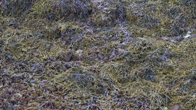 algae in water - seaweed stock videos & royalty-free footage