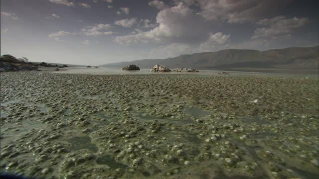 algae move with the rhythmic motion of the water at lake bogoria. - fotosintesi video stock e b–roll