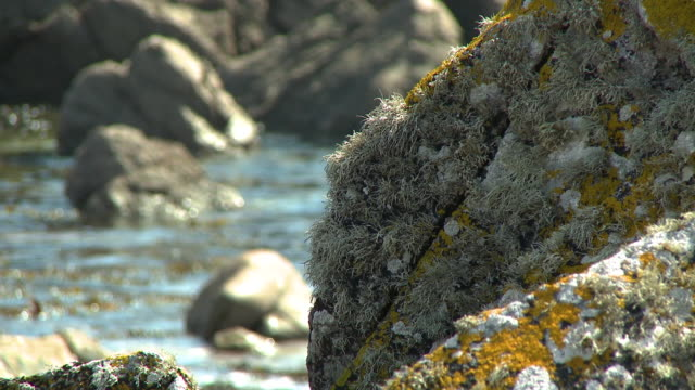 algae on large rock - tide stock videos & royalty-free footage