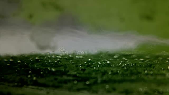 alghe che producono bolle di ossigeno - algae fuel video stock e b–roll