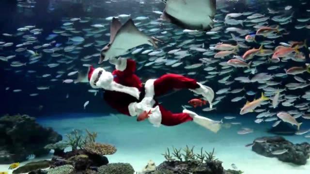algo llamo la atencion de pequenos y grandes en el acuario de tokio, y no fueron precisamente los peces exoticos voiced : navidad bajo el agua on... - agua stock-videos und b-roll-filmmaterial