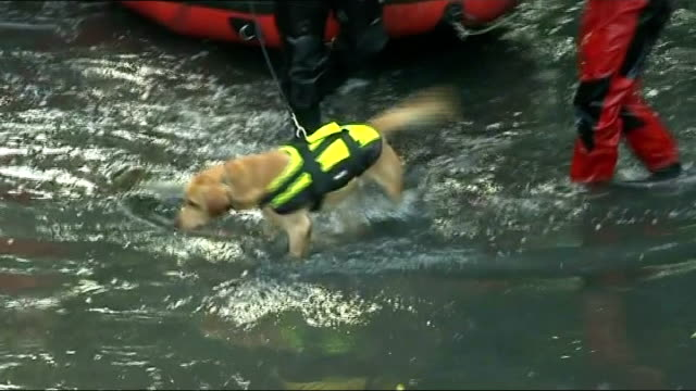 police investigation to be reviewed england london hanwell ext police divers along with dinghy and sniffer dog member of police search team along... - strafrechtliche ermittlungen stock-videos und b-roll-filmmaterial