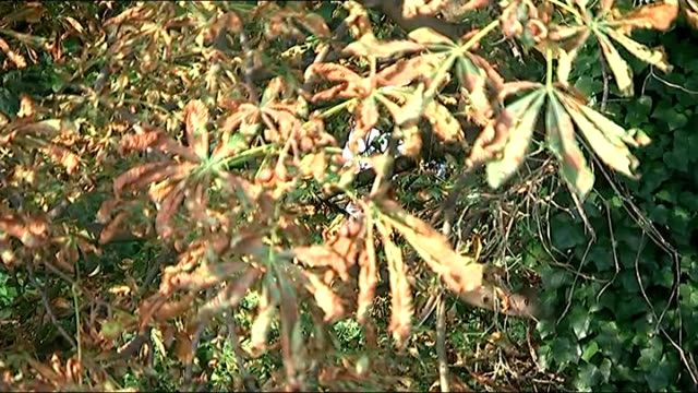 Police search continues ENGLAND London Hanwell River Brent EXT Various of police officers in forensic suits clearing undergrowth on path alongside...