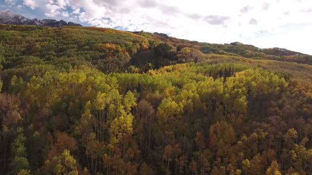 vídeos de stock e filmes b-roll de all colors aspen grove with mountain snow peak aerial, drone, 4k, rocky mountains, amazing, autumn, colorful, colors, fall, fiery, forest, green, landscape, leaves, orange, red, trees, aspen, yellow, colorado, kebler pass, mountain, raw.mov - choupo tremedor
