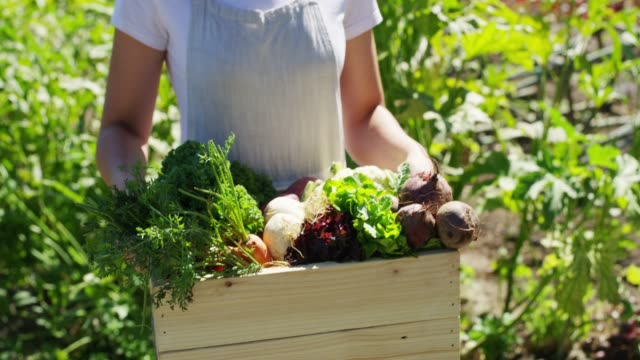 all good food comes from the farm - vegetable garden stock videos & royalty-free footage