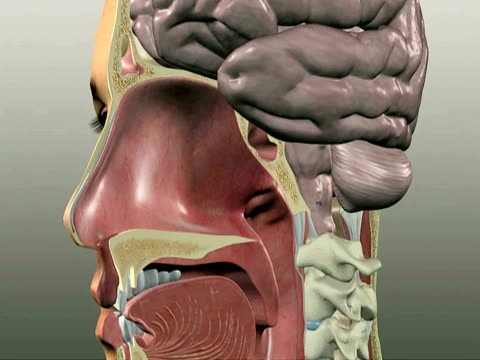 allergic response - biomedical illustration stock videos & royalty-free footage