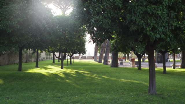 Alley of trees in a park. Green oasis in the city center