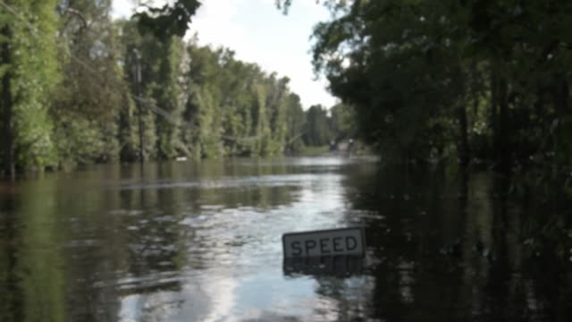 alligator invested flooding area near black creek in middle burg clay county florida united states on september 13 2017 hurricane irma took an... - florida us state stock videos and b-roll footage
