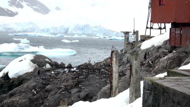 almirante brown station danco coast antarktischen halbinsel gentoo pinguine nisten - wetterstation stock-videos und b-roll-filmmaterial