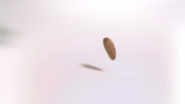 almond falling in super slow motion - アーモンド点の映像素材/bロール