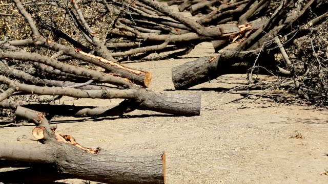 almond groves being chopped down - california stock videos & royalty-free footage
