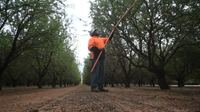 Almonds being collected and processed in the processing factory of Select Harvests near Wemen Australia on Tuesday Mar 2016 Shots low angle shot of...