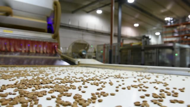 Almonds move along a conveyor at a Select Harvest Ltd plant near Wemen Victoria Australia on Wednesday Sept 23 Almonds drop from a conveyor at a...
