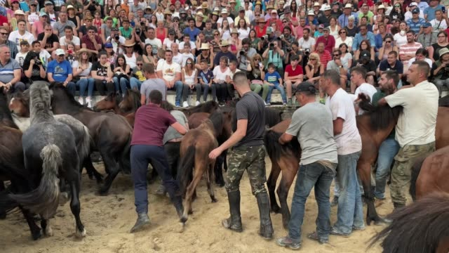 aloitadores try to tame a wild horse during the rapa das bestas on july 06 2019 in pontevedra spain during the more than 400yearold festival that... - tame stock videos and b-roll footage