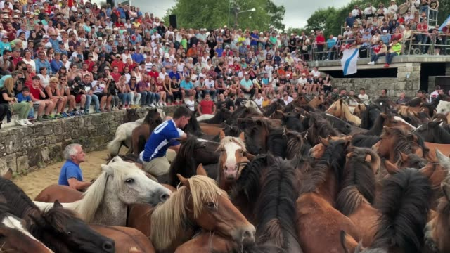 aloitadores try to tame a wild horse during the rapa das bestas on july 06, 2019 in pontevedra, spain. during the more than 400-year-old festival,... - tame stock videos & royalty-free footage