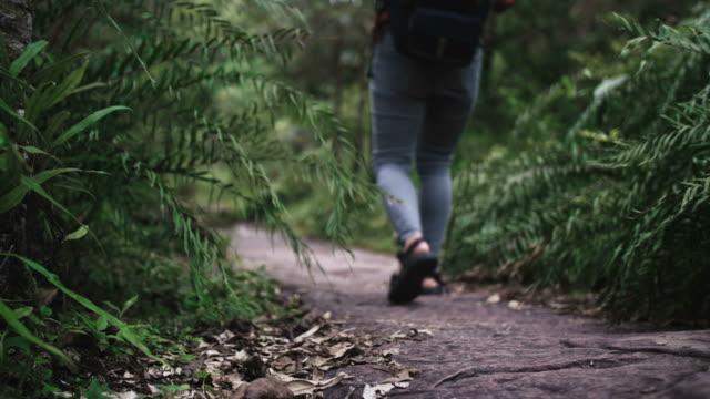 allein backpacker im tropischen regenwald erkunden - südostasien stock-videos und b-roll-filmmaterial