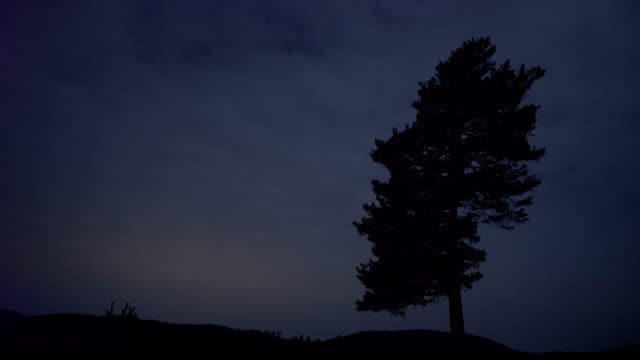Allein Baum im Wald - 4K Auflösung