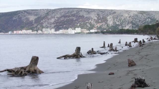 Along the northern coast of the Albanian Adriatic near the concrete buildings of the beach resort of Shengjin dozens of tree trunks are decaying in...