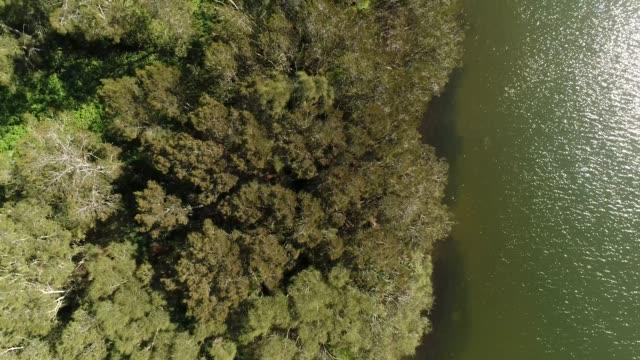vidéos et rushes de le long du front de mer de l'île immaculée éloignée avec des bois rencontrant l'eau du lac narrabeen dans la vue aérienne de haut en bas et voler. - plat