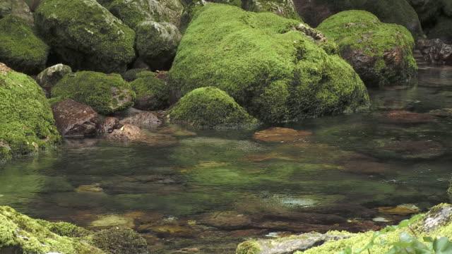 MS PAN Alpine creek, Bohinj, Triglav National Park, Slovenia