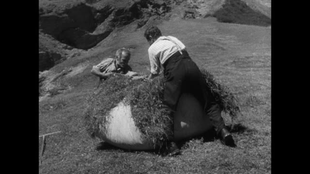 montage alpine farmer whetting scythe, cutting hay, bundling it, toting it on sleigh, loading it onto cable car, and sending it down mountain slope, and bundled hay tumbling down / switzerland - alpi video stock e b–roll