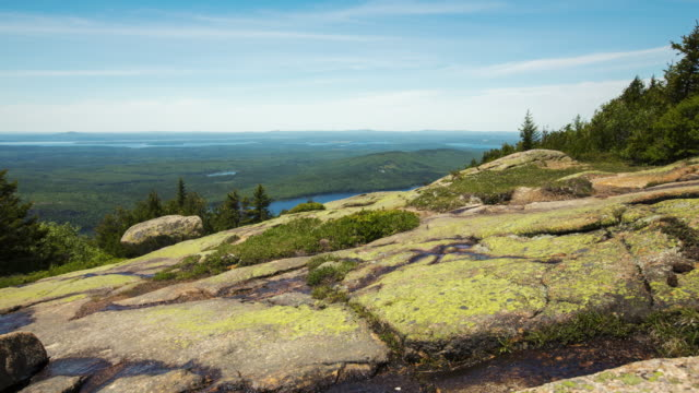 alpine flowers on cadillac mountain - maine stock videos & royalty-free footage