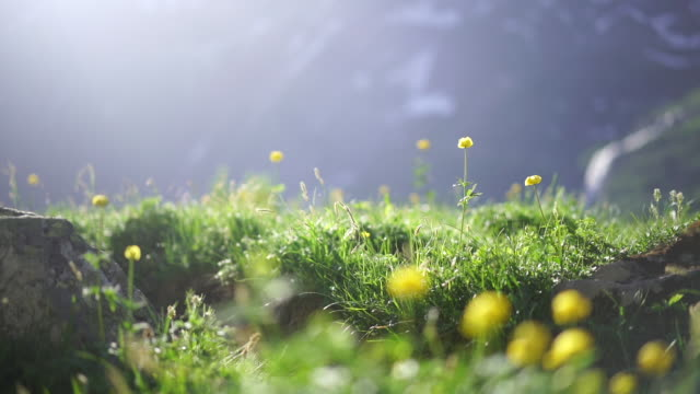 alpine meadow with dandelions - meadow stock videos & royalty-free footage