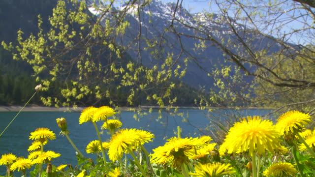 Alpine Mountain Lake In Spring
