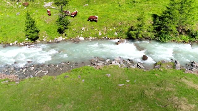 alpine mountain pasture in springtime - bestiame video stock e b–roll