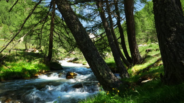 Alpinen Bergtal im Frühling