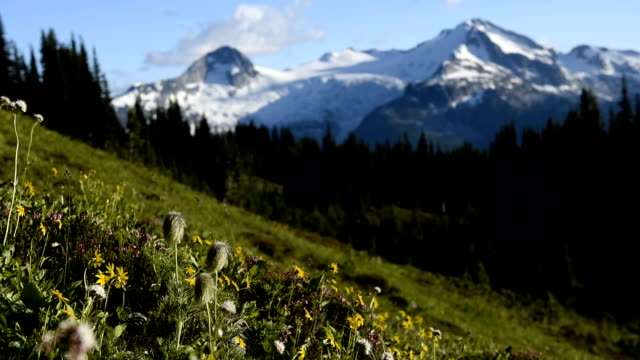 Alpine wild flowers flowing in the breeze