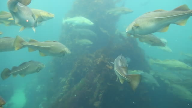 stockvideo's en b-roll-footage met alseund, the aquarium - fish swim