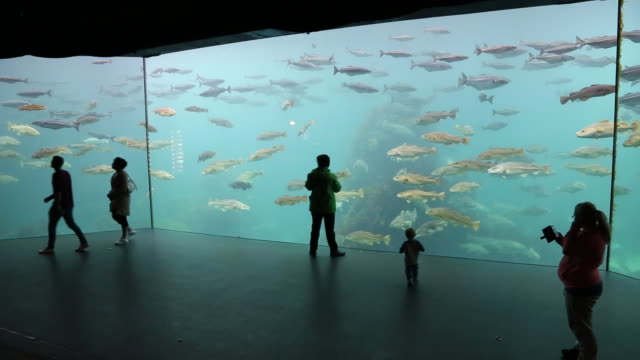 stockvideo's en b-roll-footage met alseund, the aquarium - zeedieren