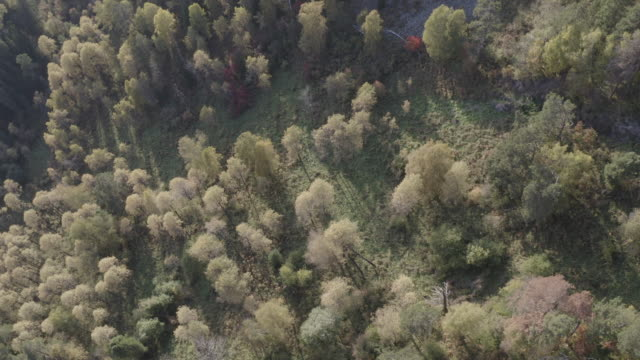 altai nature reserve - aerial view - cedar stock videos & royalty-free footage