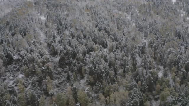 アルタイ自然保護区 - 空中写真 - ヒマラヤスギ点の映像素材/bロール