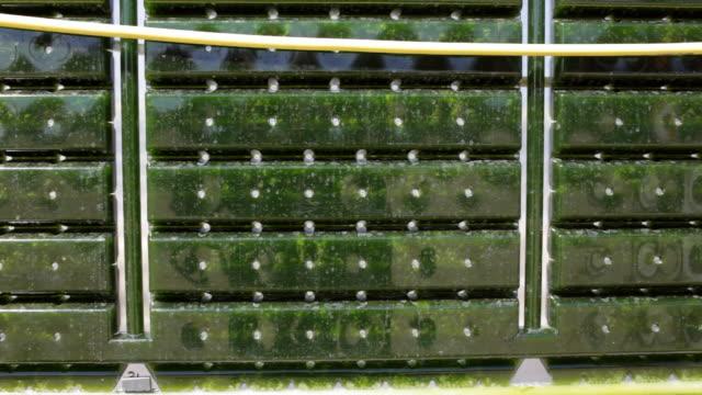 energie alternative: produzione di micro di alghe per rigenerazione alimentatore. - alga video stock e b–roll