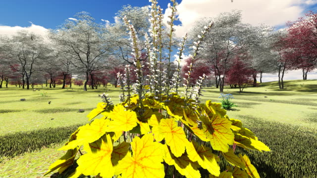 alumroot among blooming dogwood orchard - dogwood stock videos & royalty-free footage