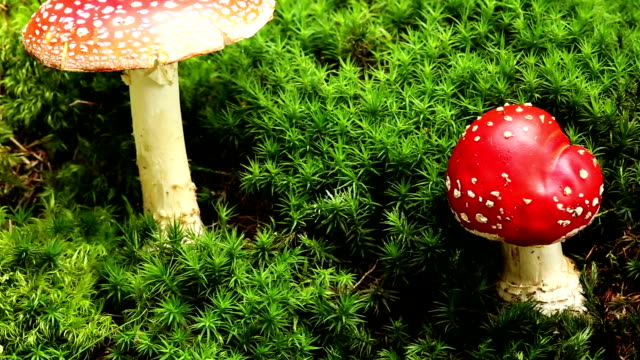 amanita muscaria - fly agaric stock videos and b-roll footage