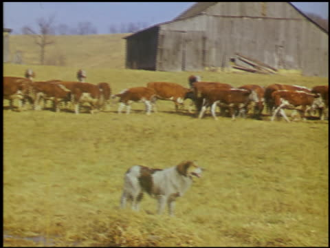 [amateur film: appalachians, 1946] - 11 of 17 - see other clips from this shoot 2023 stock videos & royalty-free footage