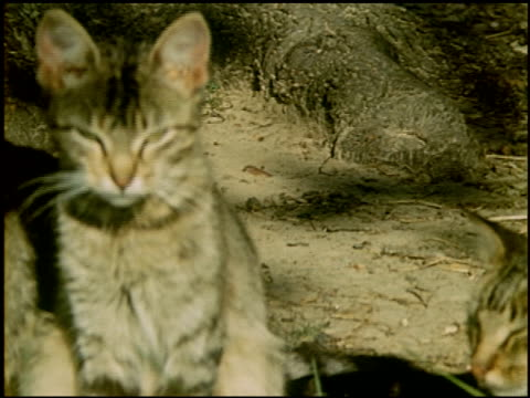 [amateur film: c.a. samsel family, r2, dequeen, arkansas] - 4 of 5 - この撮影のクリップをもっと見る 2025点の映像素材/bロール